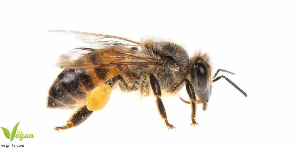 ماذا سيحدث لو انقرض النحل؟ النحل ليس مجرّد حشرات إنقراض • حياة نباتية موقع ملتقى النباتيين، حياة نباتية من أجل الحيوان الانسان البيئة والسلام