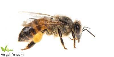 ماذا سيحدث لو انقرض النحل؟